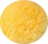 天然海綿スポンジ・シルク種の表面